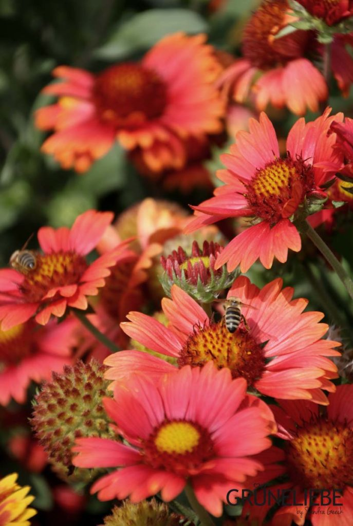 GRÜNELIEBE Gartenblog aus Köln / Hürth - Themen: Garten, Food, DIY, Grüneliebe unterwegs